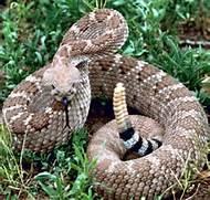 rattlesnake removal service sacramento area